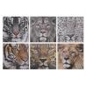 Set 6 cuadro lienzo felino 40x40 cm