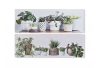 Set 2 cuadro lienzo macetas plantas verdes 90x30 cm