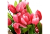 Pack 3 Plantas tulipán 3/c poliester 18 x 9 x 26 cm rosa, azul y rosa claro.