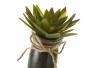Pack 4 Cactus artificial en maceta de cristal .