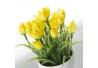 Set 6 Planta tulipán poliester en maceta de terracota.