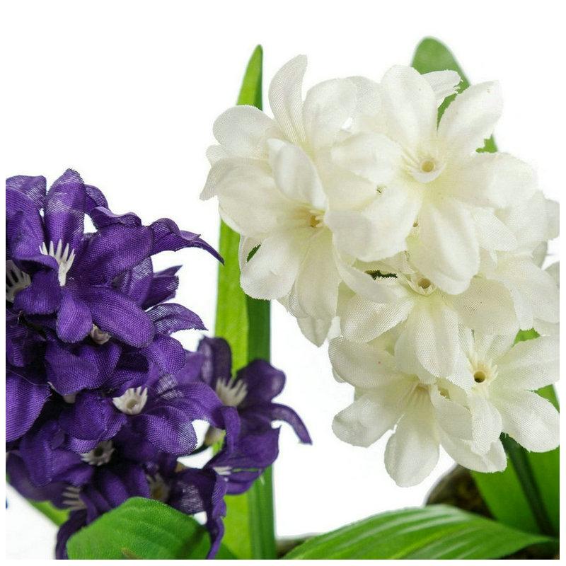 Jacintos en maceta affordable jacinto de flores blancas y - Jacinto planta cuidados ...