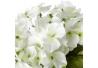 Pack 3 hortensia artificial maceta de porcelana .