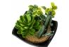 Set 2 maceta cactus plástico 10 x 10 x 10 cm base de melamina.