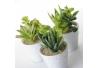 Pack 6 Cactus artificial plástico 11 cm maceta de porcelana.