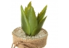 Pack 4 cactus artificial plástico en maceta de cristal