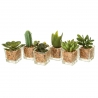 Pack 6 cactus artificial plástico en maceta de cristal .