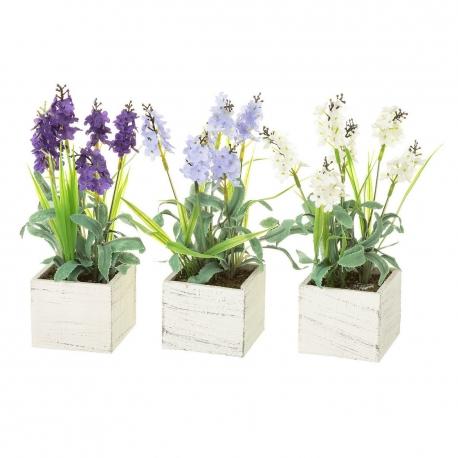Lavanda Cuidados Maceta. Fabulous Planta Aromatica Maceta Cm With ...