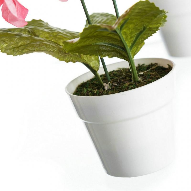 Pack 4 planta hortensia decorada en maceta - Plantar en maceta ...
